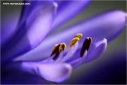 m3_138919_lilie_fb.jpg