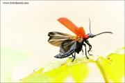 m3_820518_flieger_fb.jpg