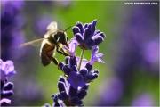 m3_822958_biene_fb.jpg