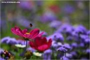 m3_825400_hummel_fb.jpg