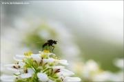 m3_922377_fliege_fb.jpg