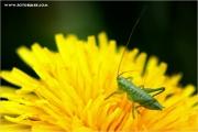 m3_922619_heupferd_fb.jpg