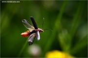 m3_923553_insekt_fb.jpg