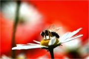 m3_929613_biene_fb.jpg