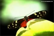 m3_941220_schmetterling_fb.jpg