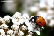 d600_123909_kaefer_fb.jpg