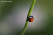 m3_104553_kaefer_fb.jpg