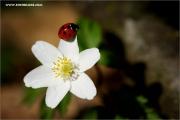 m3_129039_kaefer_fb.jpg