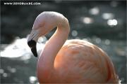 m3_105591_flamingo_fb.jpg