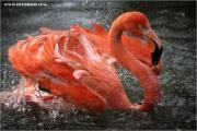 m3_918420_flamingo_fb.jpg