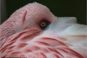 c20_519886_flamingo_fc2.jpg