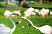 m3_102047_flamingo_fb.jpg
