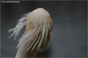 m3_812050_peli_fb.jpg