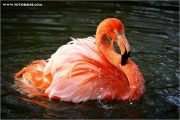 m3_918396_flamingo_fb.jpg
