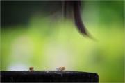 m3_930946_spatz_fb.jpg