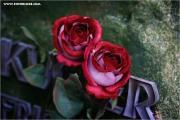 m3_914117_rose_fb.jpg