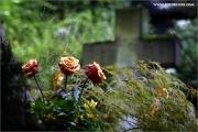 m3_937353_friedhof_fb.jpg