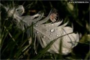 c21_624440_feder_fb.jpg