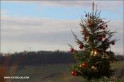 d100_153660_weihnachtsbaum_fb