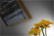 m3_912485_blume_fb.jpg