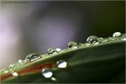 c21_611183_tropfen_fb.jpg