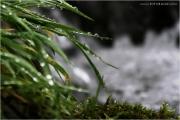 c21_716272_regen_fb.jpg