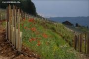 d100_156590_rulaender_fb