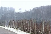 d100_152429_winter_fb.jpg