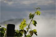 c21_610808_nebelrebe_fb.jpg