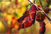 c21_618015_blatt_fb.jpg