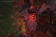 c21_697797_blatt_fb.jpg