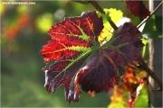 c21_736082_blatt_fb.jpg