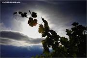 htc_120093_rebe_fb.jpg