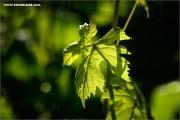 m3_101824_blatt_fb.jpg