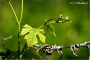 m3_101875_blatt_fb.jpg