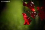 m3_107422_blatt_fb.jpg