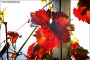 m3_107440_blatt_fb.jpg