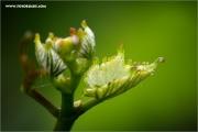 m3_121116_rebe_fb.jpg