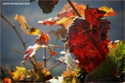 m3_132364_blatt_fb.jpg