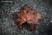 m3_133109_blatt_fb.jpg