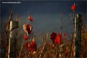 m3_133168_blatt_fb.jpg