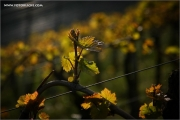 m3_137696_rebe_fb.jpg