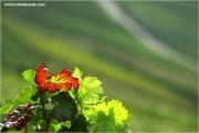 m3_830165_weinberg_fb.jpg