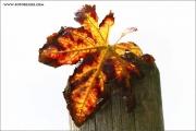 m3_830394_blatt_fb.jpg