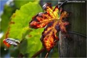 m3_830398_blatt_fb.jpg