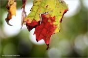 m3_934669_blatt_fb.jpg