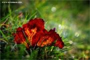 m3_940890_blatt_fb.jpg