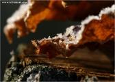 c20_617202_blatt_fb.jpg