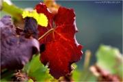 c21_613258_blatt_fb.jpg