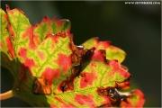 c21_617564_blatt_fb.jpg